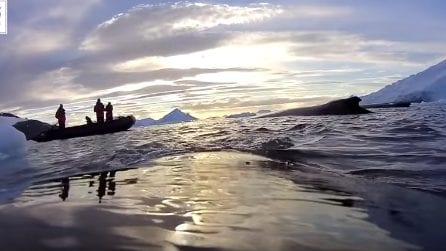 Agganciano una telecamera a una balena: le immagini mozzafiato