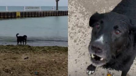 Fa i capricci perché non vuole andarsene dalla spiaggia: il cane è dolcissimo