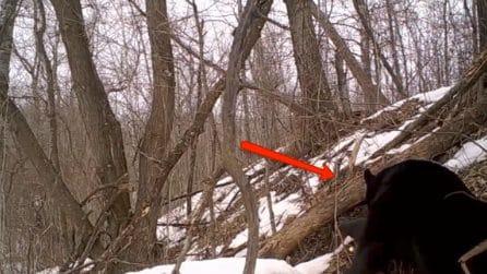 Piazza la telecamera vicino a una grossa buca nel bosco: fa una scoperta straordinaria