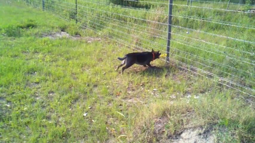 Recinto Elettrico Per Cani.Cane Vs Recinto Elettrico Ecco Cosa Succede Quando L Animale Morde
