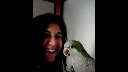"""Il pappagallo canta """"Waka Waka"""" insieme alla padrona: è sorprendente"""