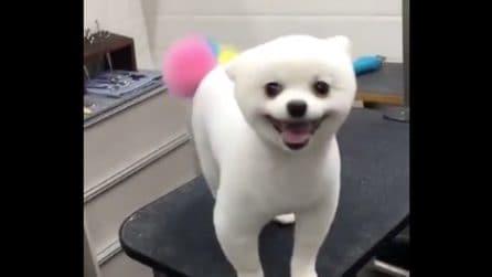 Il simpatico cagnolino un look davvero unico: guardate la sua coda
