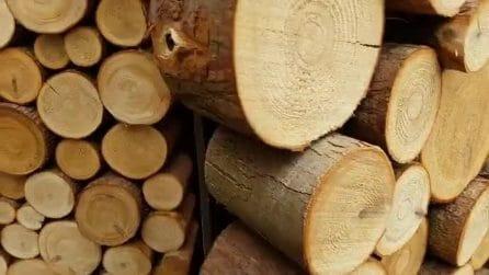 "Sembra una pila di pezzi di legno, ma in realtà all'interno c'è una ""sorpresa"""