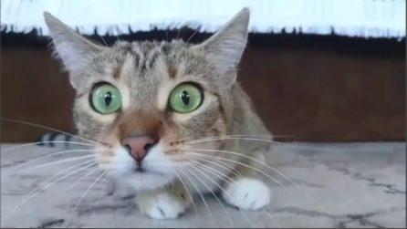 Il gatto si spaventa guardando gli horror: ecco come regisce
