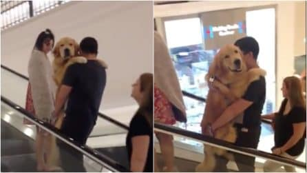 Un enorme cucciolo sulle scale mobili: il cane va in giro tra le braccia del padrone
