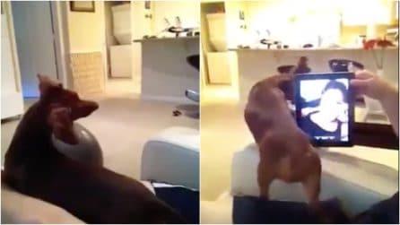 Sente la voce della padrona e inizia a cercarla: la dolce reazione del cagnolino