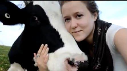 Una mucca per amica: il loro è un legame davvero speciale