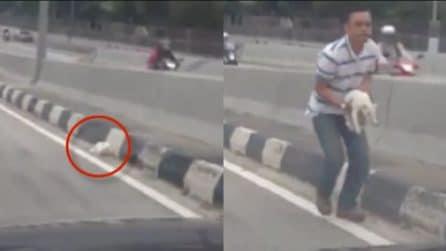 Vede un gattino ferito sul ciglio della strada: ecco cosa fa quest'uomo