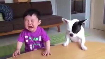 Ruba il biscotto al bambino che scoppia a piangere: la reazione del cane è esilarante