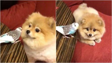 Il primo incontro tra cane e pappagallino: la scena è dolcissima