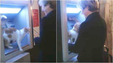 Un gatto dispettoso fa la guardia al bancomat: la scena è esilarante