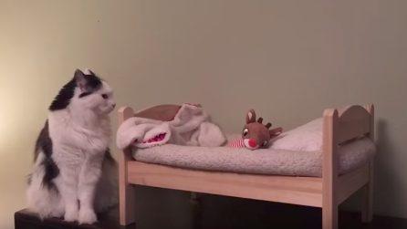 La gattina si prepara per andare a letto: la scena è dolcissima