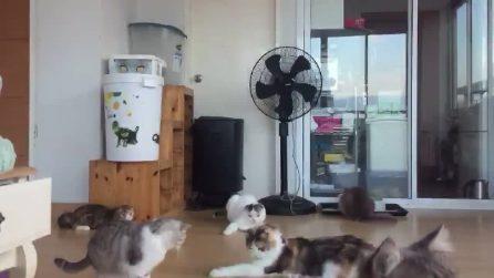 """Il puntino verde sul pavimento fa """"impazzire"""" i gatti"""