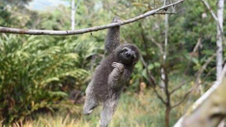 L'animaletto è paralizzato dalla nascita: la sua tenerezza vi conquisterà