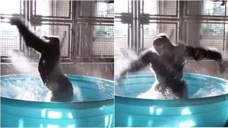 """Il gorilla ballerino conquista tutti: in piscina fa le piroette come la protagonista di """"Flashdance"""""""