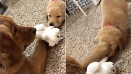"""I cani vogliono lo stesso giocattolo: la """"lite"""" più dolce che ci sia"""