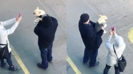 Scattano foto al cagnolino da ogni angolazione: la scena comica