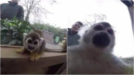 """La scimmietta si accorge che il guardiano la sta filmando e gli """"ruba"""" la telecamera"""