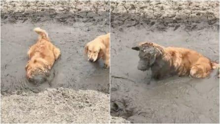 Il cane si rotola nel fango e impazzisce di gioia: la scena è dolcissima