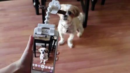 """Il cane si """"mette in posa"""": un trucchetto per scattargli le foto"""