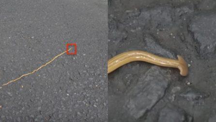 Sembra un serpente, ma quando inquadra la testa scopre di cosa si tratta: