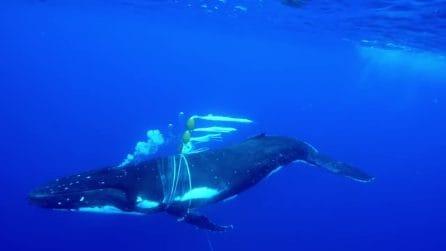 Sentono il drammatico pianto della balena intrappolata nella rete: ragazzi salvano il grosso cetaceo