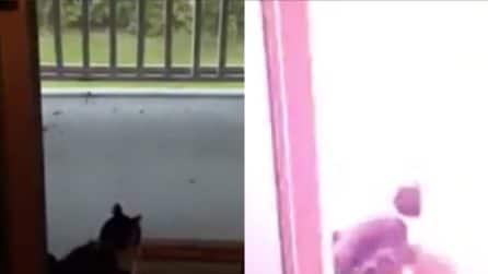 Il fulmine cade all'improvviso: grande spavento per il gattino