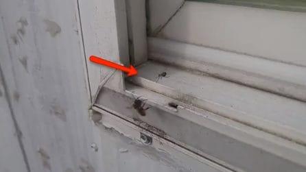 Nota qualcosa di strano vicino alla finestra: il ragno tenta di divorare un'ape