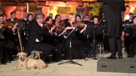 L'orchestra suona e il cane entra in scena: gli applausi sono tutti per lui