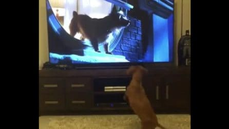 Vede i cani in tv e abbaia: la tenera bassottina vuole giocare