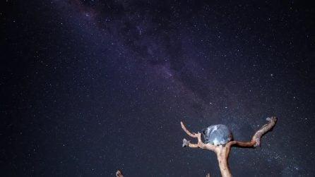 Una notte sotto le stelle in compagnia di Grace il koala: le immagini meravigliose in time-lapse