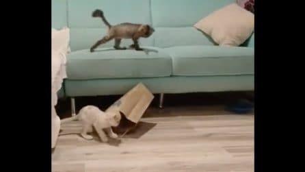 Gioca con la busta e resta incastrato: il gattino le prova tutte per liberarsi
