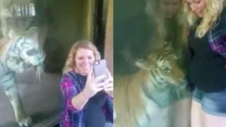 """La tigre """"accarezza"""" il pancione della donna: la scena è dolcissima"""