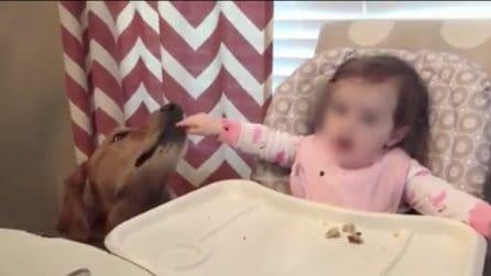 La bimba dà da mangiare al cane: la scena è adorabile