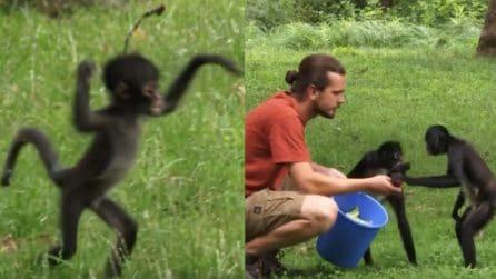 Momenti tenerissimi per la famiglia di scimmie: mangiano e si coccolano
