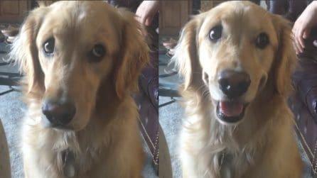 Preoccupato e poi sorridente: la divertente reazione del cane