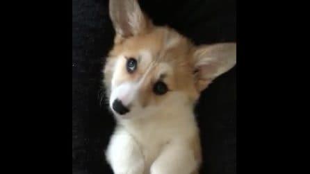 """""""Non ti fermare"""": l'espressione simpaticissima del cagnolino è inequivocabile"""