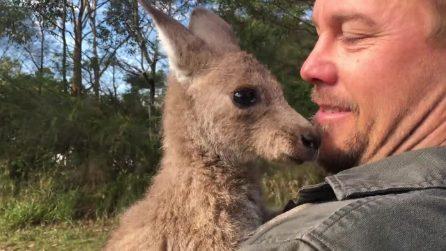 Un cucciolo di canguro è l'ultimo arrivato: è amore a prima vista
