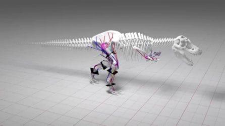 Il T-rex era lento: raggiungeva al massimo i 20 km/h