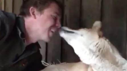 Va a farle visita e scopre la bella sorpresa: la splendida intesa tra mamma dingo e il guardiano
