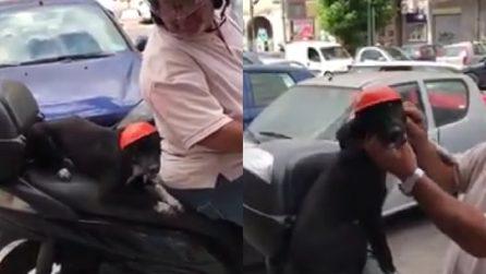 Napoli, la cagnolina con il casco: va via sullo scooter insieme al padrone