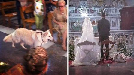 Porta le fedi all'altare per consacrare l'amore dei suoi padroni. La sua storia è un esempio.