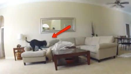 La telecamera spia il cane solo a casa: dopo pochi minuti si scatena il caos
