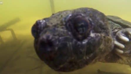 L'apparizione nelle acque del lago: la tartaruga torna a farsi vedere dopo tantissimo tempo