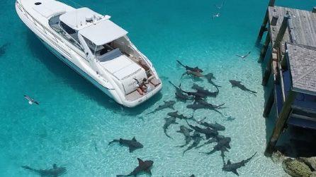 Lo spettacolo delle Bahamas, quando fuori casa c'è un branco di squali ad aspettarti
