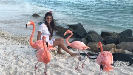 """È conosciuta come """"Flamingo Beach"""", la spiaggia dove puoi fare il bagno con i fenicotteri rosa"""