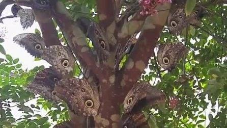 Sull'albero sembra ci siano tanti occhi: quando si avvicina scopre di cosa si tratta