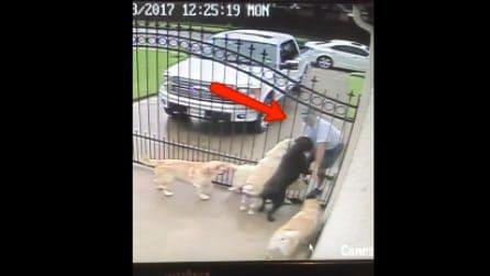 Il postino si avvicina ai cani mentre i padroni non sono a casa: il video diventa virale