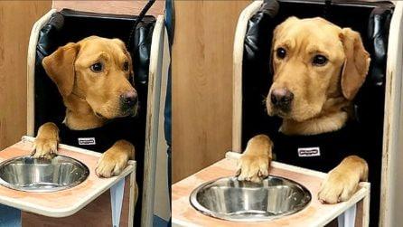 Il cane soffre di una rara malattia: costretto in questa posizione per sopravvivere