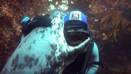Ben Burville abbraccia le foche: storia del sub che ha trovato l'amore in fondo al mare